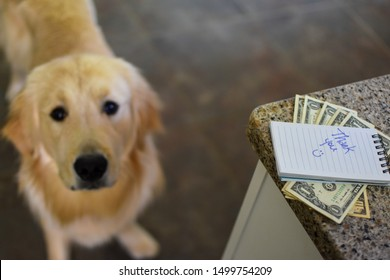 money with a thank you note on top sitting on granite countertop with bokeh effect golden retriever dog in the background pet care concept