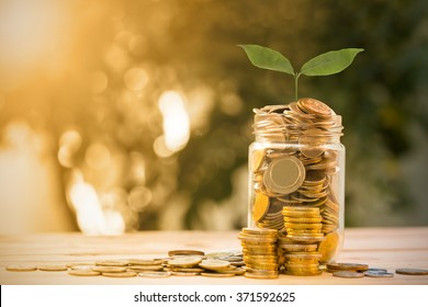 Money tree with coin for growing your business