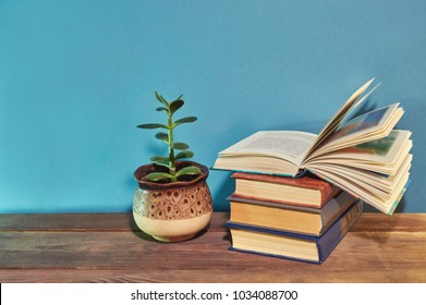 money tree (Crassula ovata) about books on a wooden table