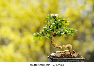 Money tree with european coins.