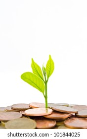 Money Tree growing from a pile of coins. Isolated on white background.