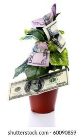 money tree isolated on white background