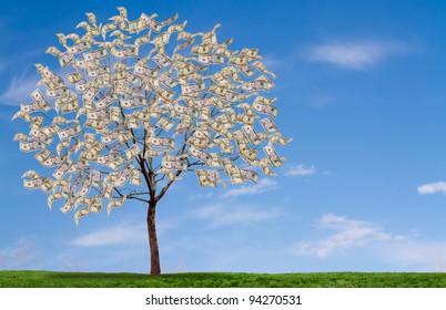 Money tree on blue sky, and grassy field