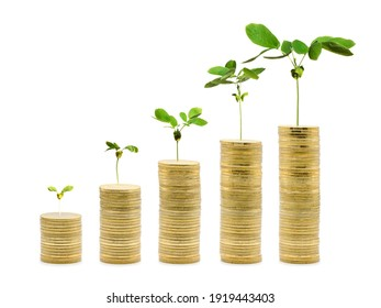 Money Trees are growing on the tower gold coin stack, increasing from small to high. Money Saving financial growth concept on isolated white background. Clipping paths