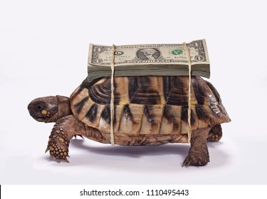 The money turtle transporting one dollar bills.