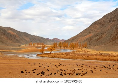Mongolia in Autumn is the most beautiful season of the year