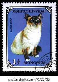 MONGOLIA- CIRCA 1979: A stamp printed in Mongolia shows Cat of Birma, series, circa 1979