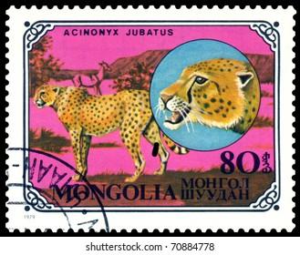 MONGOLIA - CIRCA 1979: A stamp printed in Mongolia shows wild cats Cheetahs, series, circa 1979