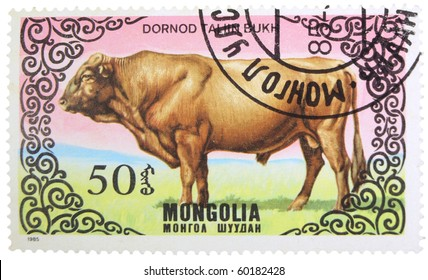 MONGOLIA - CIRCA 1985: A stamp printed in Mongolia showing Dornot Taliin Bukh cattle, circa 1985