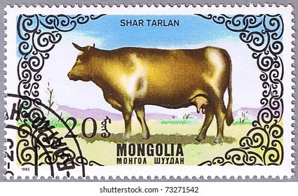 MONGOLIA - CIRCA 1985: A stamp printed in Mongolia shows a cow breed Shar Tarlan, a series devoted to cattle, circa 1985