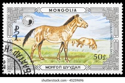 MONGOLIA - CIRCA 1986: A stamp printed in Mongolia shows horse, circa 1986