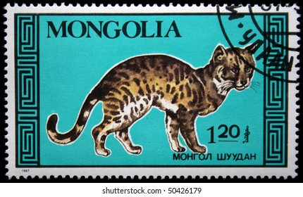 MONGOLIA - CIRCA 1987: A postage stamp printed in Mongolia shows cat, series, circa 1987