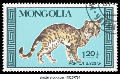 MONGOLIA - CIRCA 1987: A stamp printed in Mongolia shows Cat, circa 1987