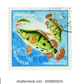 MONGOLIA - CIRCA : a stamp printed by Mongolia show the fishes with the inscription 'siniperca chuatsi', series