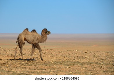 mongolia desert gobi ger