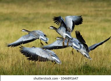 Mongolia wildlife and animals