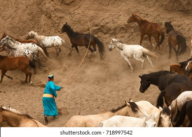 Mongolian Horses in the steppes of Mongolia