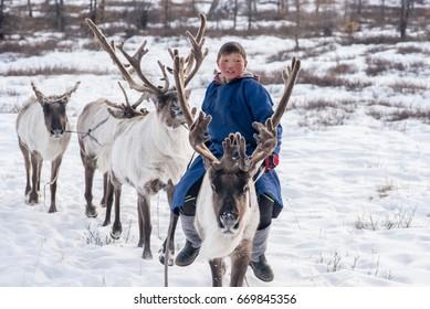 Mongolian Reindeer in traditionally Tsaatan family on their Reindeers at Taiga, Mongolia