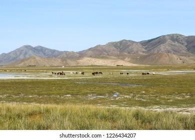 Mongolian steppe landscape. Horses graze near the lake