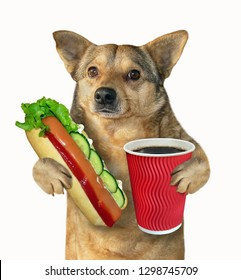 The mongrel dog holds a big hot dog and a paper cup of coffee. Isolated. White background.