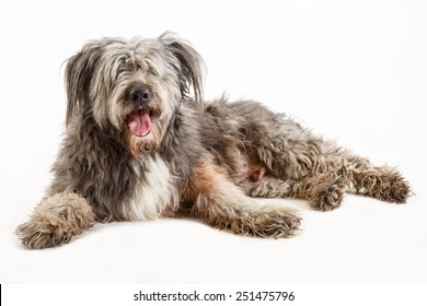 the mongrel dog is lying on white background