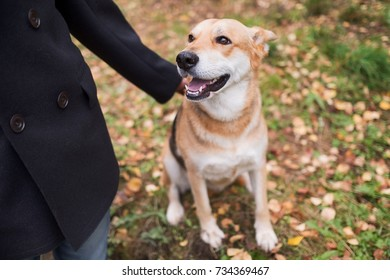 The mongrel sits at the feet of his master and looks up enthusiastically. Friendship between man and animal