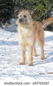 Mongrel terrier on a winter background