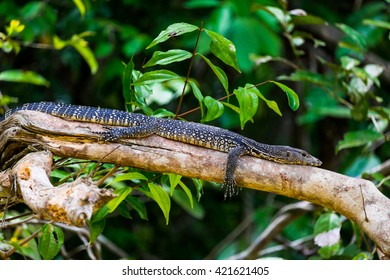 Monitor lizard resting on a tree branch.