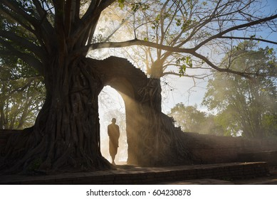 Monk thai walk out the door with all the trees covered, Monk Thai is a Buddhist with faith, Buddhists worship Thai with faith, Ayutthaya historical park in Thailand.