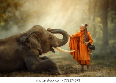 Monk walking hiking with canny Elephant in forest.
