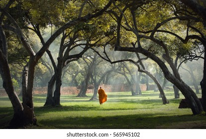 Monk walking in the park,Buddhist monk meditating under a tree  at Ayutthaya,buddhist temple  in Thailand