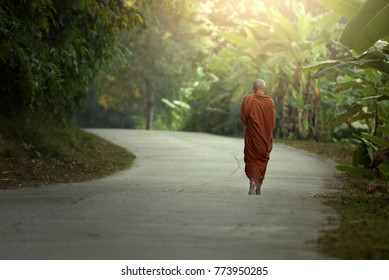 The monk walks along the morning road.
