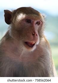 Monkey Alone animal