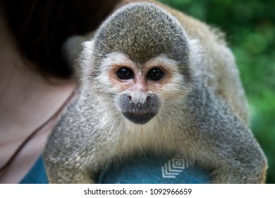 Monkey in Amazonas