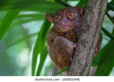 Monkey, Asia, Philippines, Tagbilaran, Summer