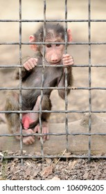 Monkey baby in cage