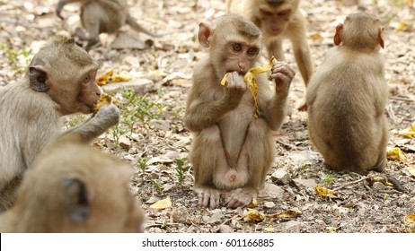 Monkey baby eating bananas on the ground as the background.