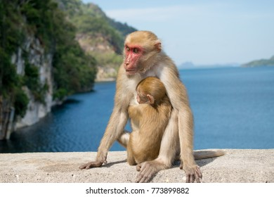 monkey with baby sitdown on concrete and look to the left
