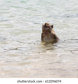 Monkey bathe