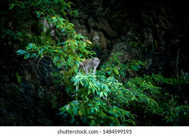The Monkey at Batu Cave, Malaysia