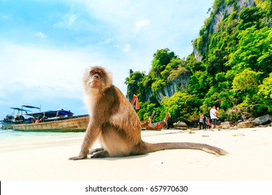 Monkey Beach, Phi Phi Islands, Thailand