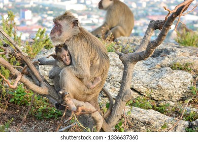 Monkey carrying baby on mountain.