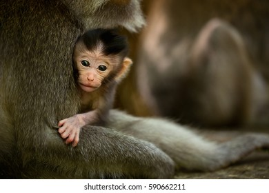 Monkey child in Ubud Bali