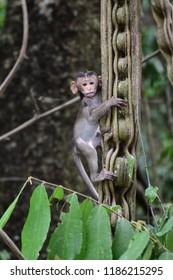 ฺิBaby monkey climb on Vine Valley with misbehavior.