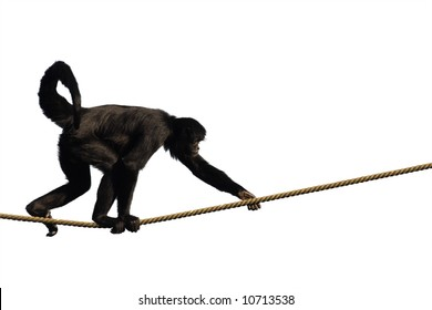 Monkey climbing on a rope, isolated on white