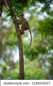 Monkey climbs up the tree