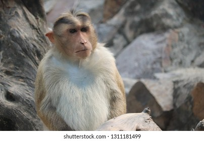 Monkey is a common name that may refer to groups or species of mammals, in part, the simians of infraorder Simiiformes.