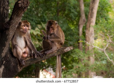 Monkey couple - Couple of monkeys sitting on the tree and relaxing