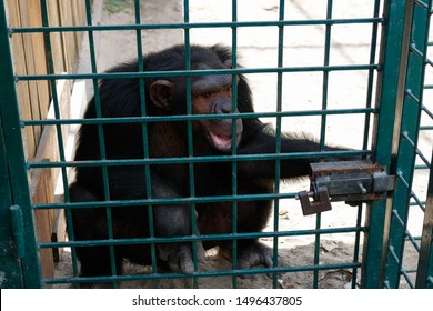 Monkey with a cub in a cage behind bars in a zoo in the summer
