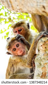 Monkey with monkey cub on tree. Monkey love. Funny monkey family